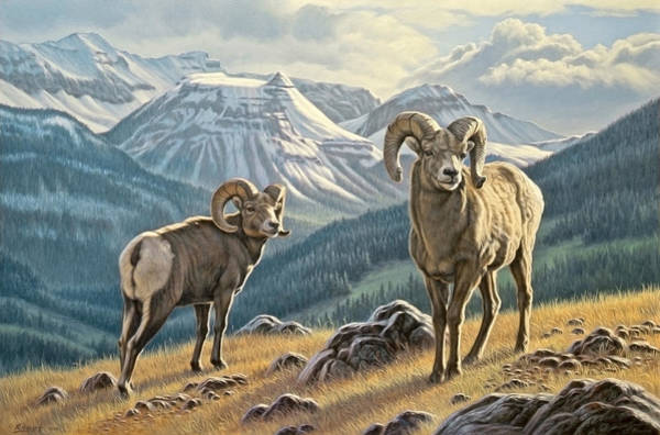 Wall Art - Painting - Jasper Rams by Paul Krapf
