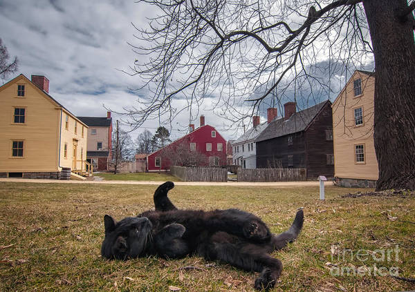 Black Cats Photograph - J.d. Dreaming The Day Away by Scott Thorp