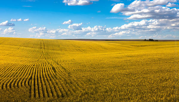 Photograph - Je Suis Ukraine by Alexander Fedin