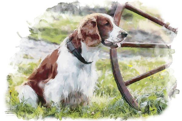 Welsh Springer Spaniel Painting - Jebu by Kai Saarto
