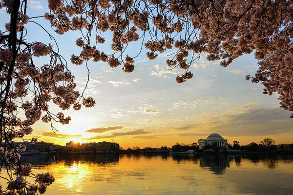 Tidal Basin Photograph - Jefferson Memorial Framed By Cherry by Ogphoto