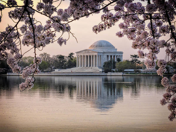 Photograph - Jefferson Memorial Framed By Spring Cherry Blossoms by Victoria Porter