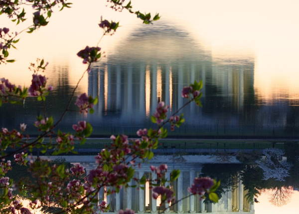 Photograph - Jefferson Memorial Reflection With Cherry Blossoms by Karen Saunders