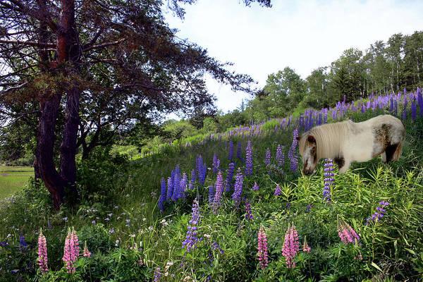 Photograph - Jefferson Shetland Scape by Wayne King