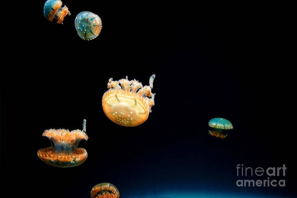 Photograph - Jellies by Eric Wiles