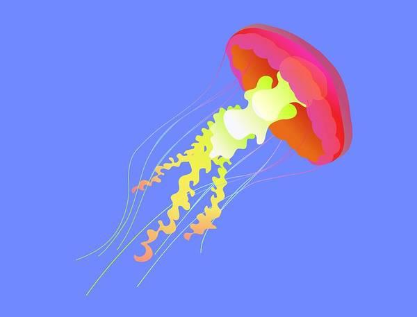 Netherlands Digital Art - Jellyfish by Illustration By Sjors Tomlow