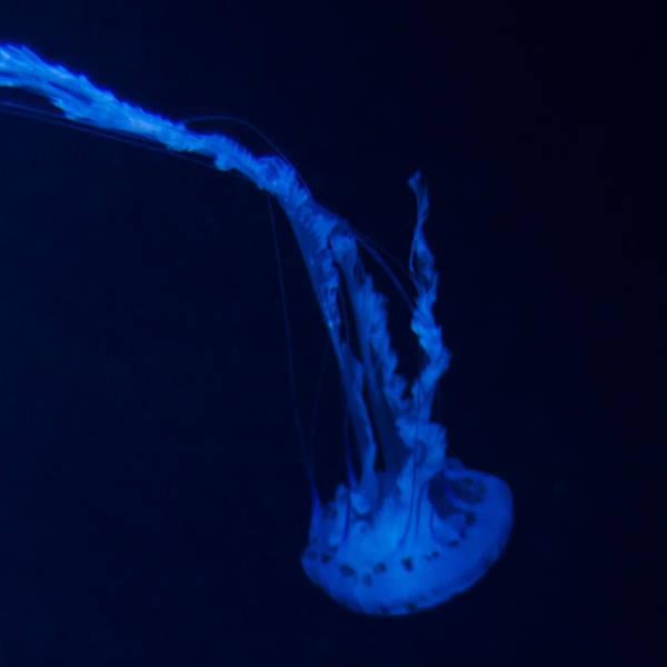 Photograph - Jellyfish Square Diptych 13-0830 Set 2/2 by U Schade