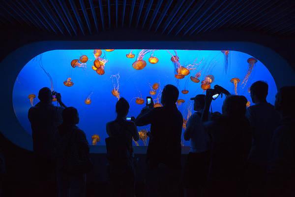 Monterey Bay Aquarium Photograph - Jellyfish Viewing by Brian Knott Photography