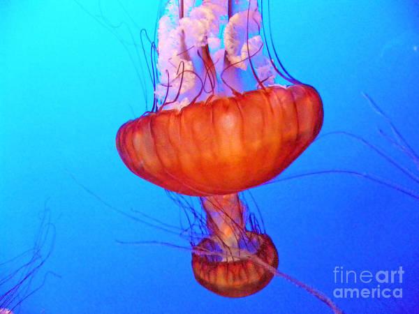 Ocean Life Photograph - Jellyfish Viii by Elizabeth Hoskinson