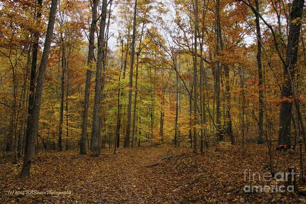 Photograph - Jenkins Gap Trail by Barbara Bowen