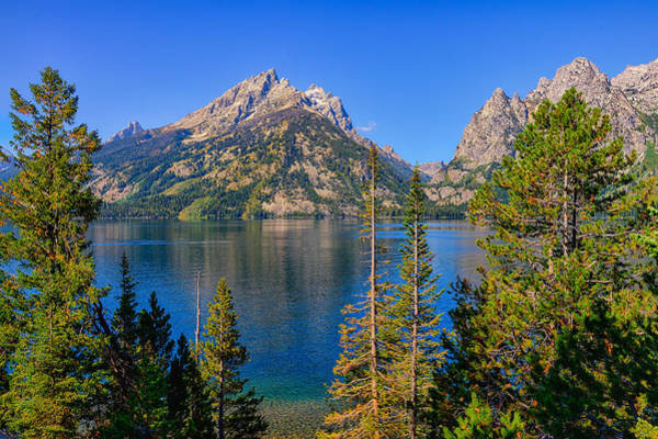 Art Print featuring the photograph Jenny Lake Overlook by Greg Norrell
