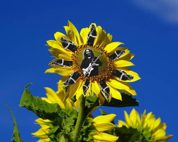 Photograph - Jerry Sunflower by Ben Upham