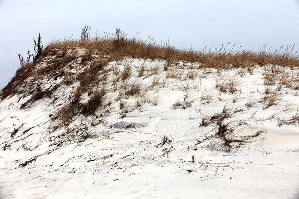 Down The Shore Photograph - Jersey Shore Dune by John Rizzuto