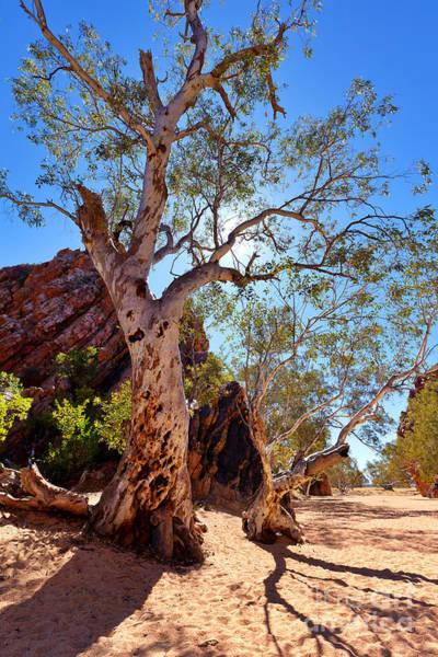 Northern Territory Photograph - Jess's Gap by Bill  Robinson