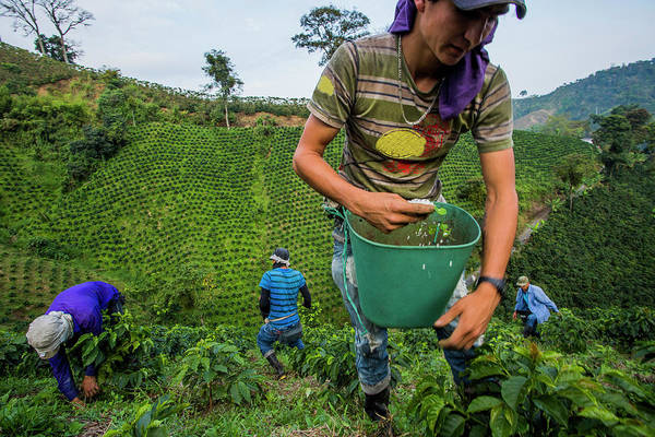 Manizales Photograph - Jesus Alberto Dazza Scoops Fertilizer by Modoc Stories