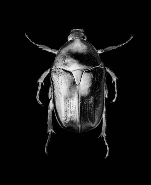 Silvery Photograph - Jewel Beetle by Yacine M'seffar/science Photo Library