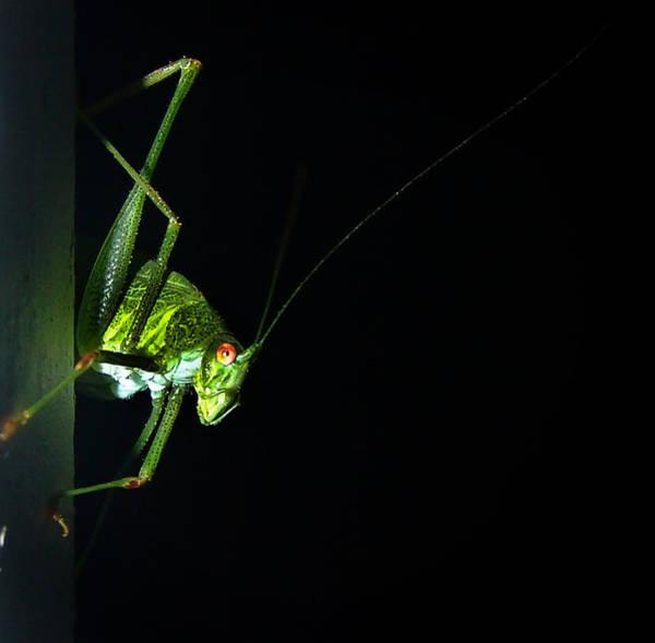 Photograph - Jiminy Cricket by Alessandro Della Pietra