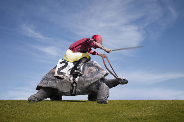 Jockey Over A Turtle Art Print by Buena Vista Images