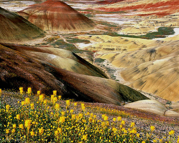 Photograph - John Day Painted Hills Oregon by Ed  Riche