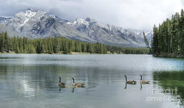 Photograph - Johnson Lake In Banff by David Birchall