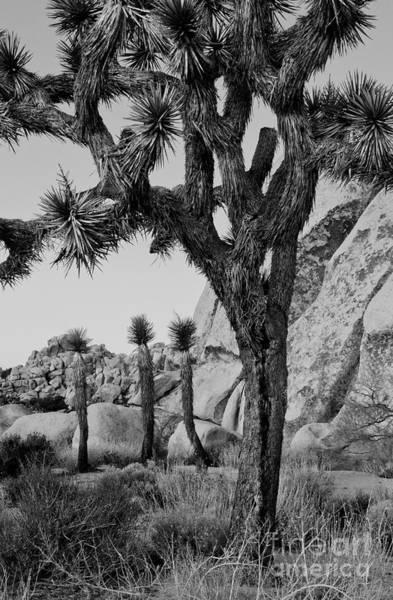 Joshua-tree Babies Art Print by Mae Wertz