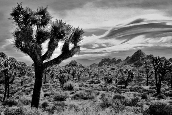 Indio Photograph - Joshua Tree Black And White by Benjamin Yeager