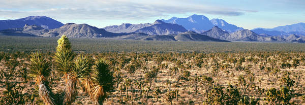 San Bernardino Photograph - Joshua Tree Forest With Mountain Range by Panoramic Images