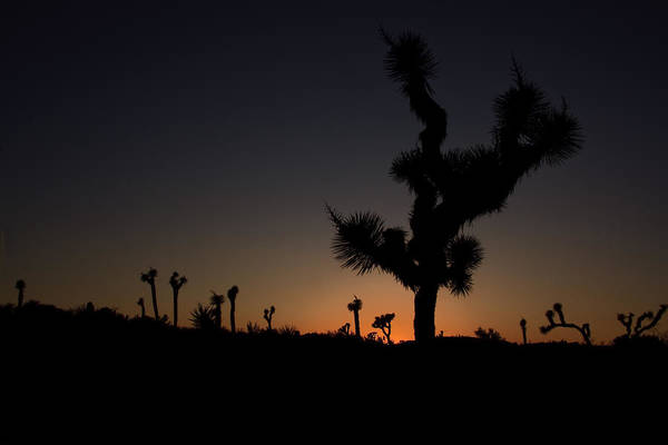 Photograph - Joshua Tree In Silhouette by Susan Leonard