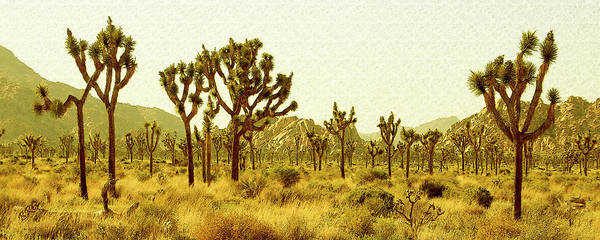 Photograph - Joshua Tree National Park by Ben and Raisa Gertsberg