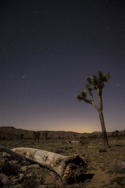 Photograph - Joshua Tree Night 3 by Lee Kirchhevel