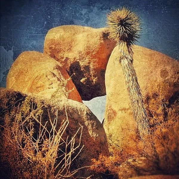 Sunny Photograph - Joshua Tree Np by Jill Battaglia