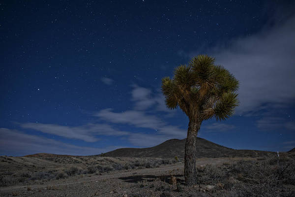 Photograph - Joshua Tree  by Rick Berk