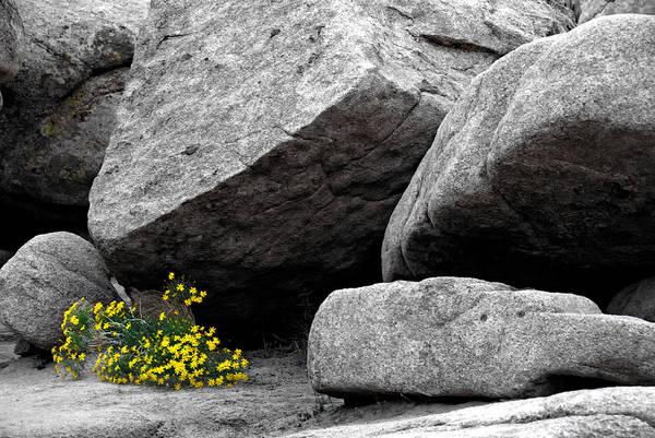 Wall Art - Photograph - Joshua Tree Rocks And Flowers One by Paul Basile