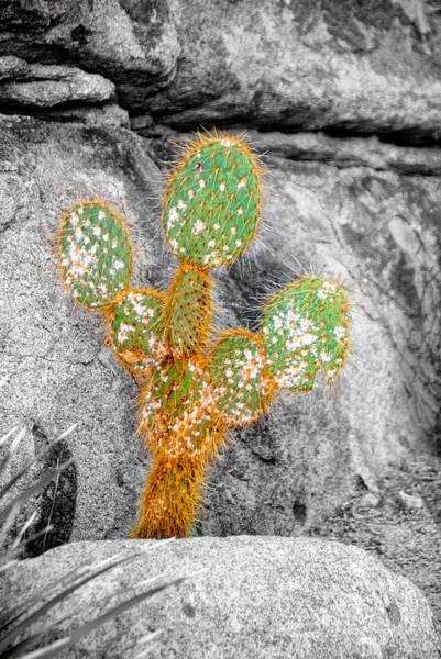 Wall Art - Photograph - Joshua Tree Rocks And Flowers Three by Paul Basile