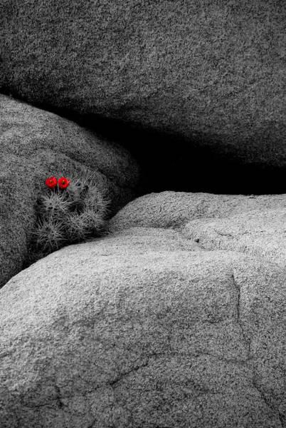 Wall Art - Photograph - Joshua Tree Rocks And Flowers Two by Paul Basile