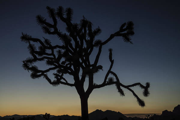 Photograph - Joshua Tree Silhouette At Dusk by Lee Kirchhevel