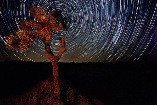 Big Sky Photograph - Joshua Tree Star Trails by Peter Tellone