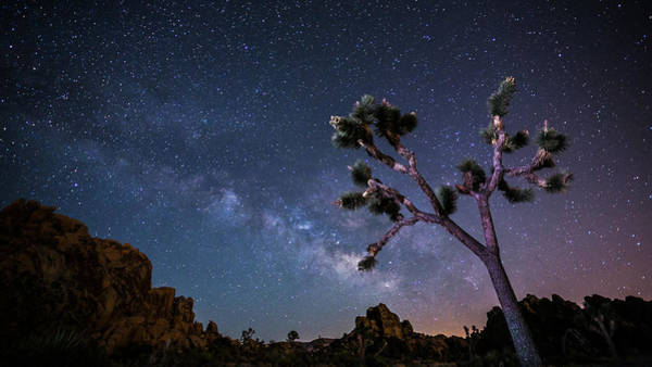 Yucca Brevifolia Photograph - Joshua Tree With Milky Way by Sungjin Ahn Photography