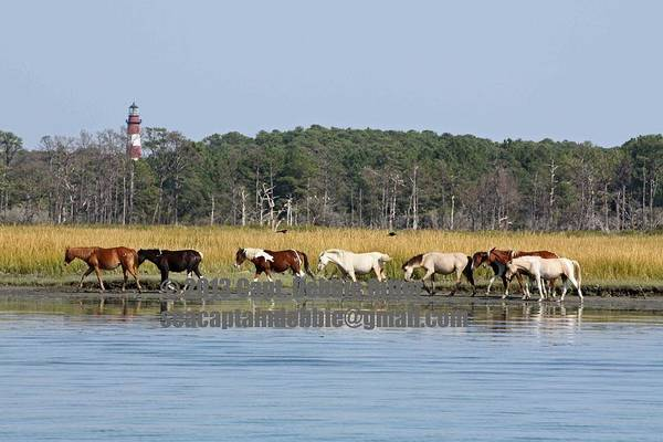 Photograph - Journey On by Captain Debbie Ritter