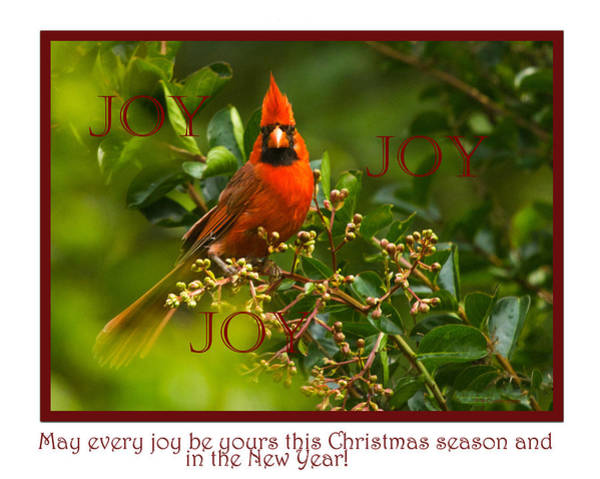 Photograph - Joy by Dorothy Cunningham