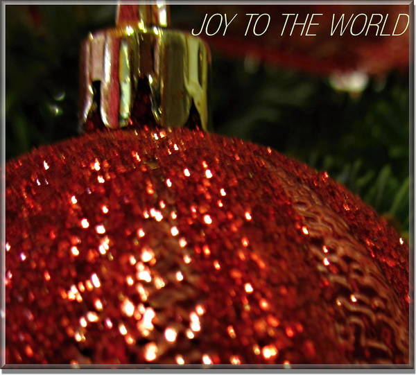 Photograph - Joy To The World Card by Danielle  Parent