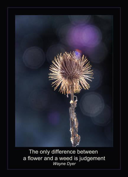 Photograph - Judgement by Rick Mosher