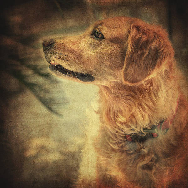 Sweet Puppy Photograph - Golden Retriever by Zapista Zapista