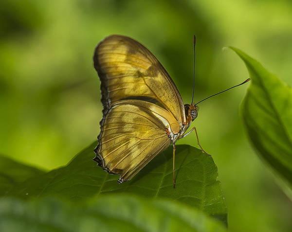 Photograph - Julias Butterfly by Sean Allen