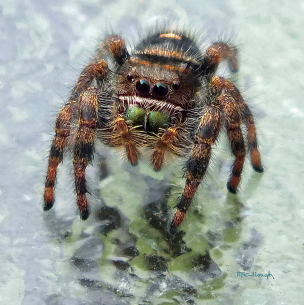 Photograph - Jumper Spider 4 by Duane McCullough