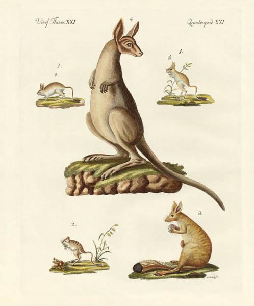 Kangaroo Drawing - Jumpers by Splendid Art Prints