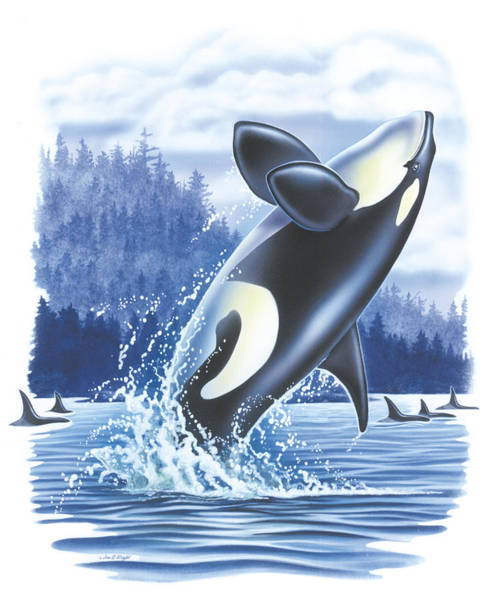 Saltwater Wall Art - Painting - Jumping Orca by JQ Licensing