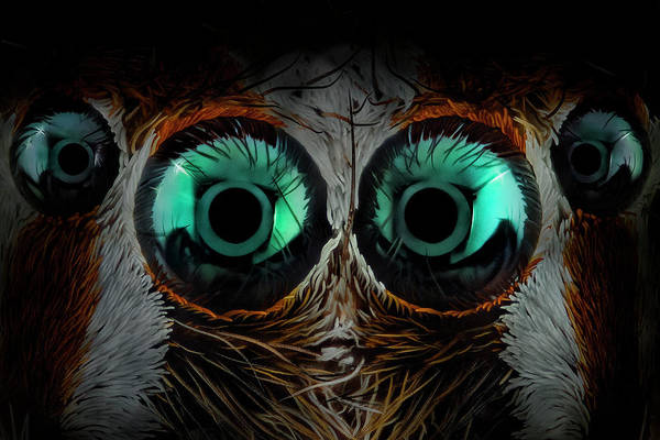 Wall Art - Photograph - Jumping Spider Eyes by Javier Rup?rez