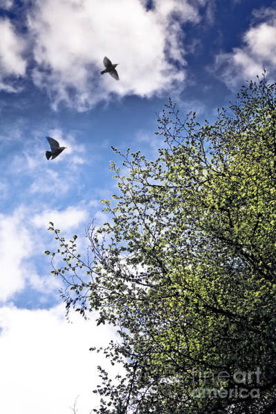 Two Birds Photograph - June Freedom by Jan Bickerton