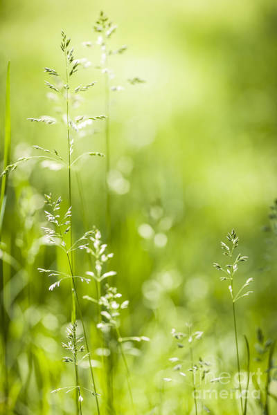 Flowering Plants Photograph - June Green Grass  by Elena Elisseeva